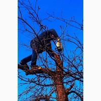 Обрезка старых деревьев, восстановление старых садов