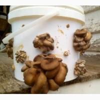 Ведро-контейнер 33 литра пищевой с герметической крышкой